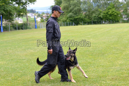 cane cane da pastore ubbidiente uomo