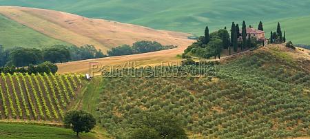 collina estate toscana tipico regione paesaggio