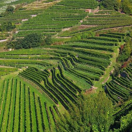 collina verde austria vigneti europa muro