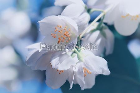 primo piano close up fioritura fiorire
