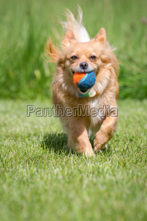 palla catturata