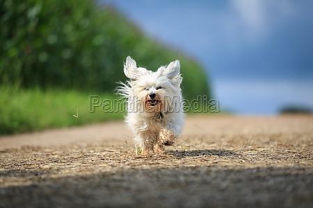 animale animale domestico cane sfrecciare veloce