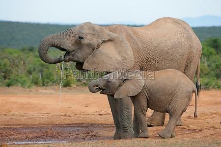 enorme bere parco animale mammifero selvaggio