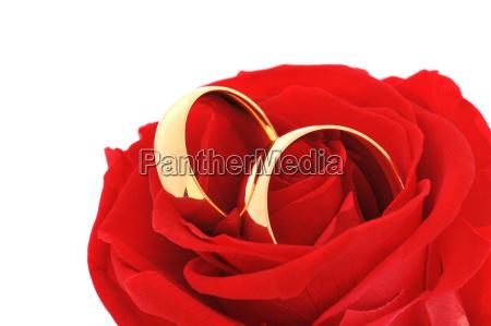 due anelli con rosa