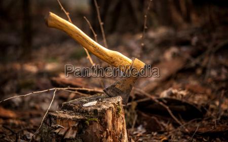 albero legno taglio tagliare ascia scure