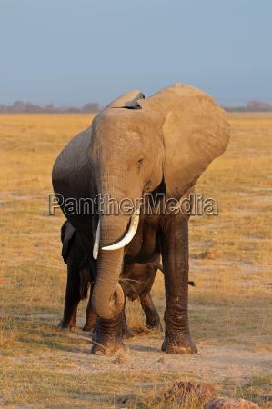 viaggio viaggiare enorme parco animale mammifero