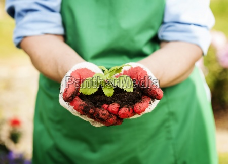 woman holding small plant in hands