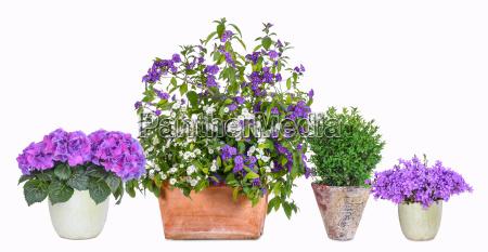 diversi vasi di fiori