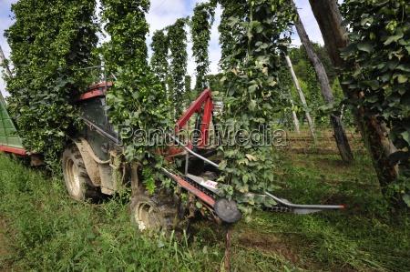 fruttafrutta hophoppiantapianteagricolturaproduzione agricolaal fine terreniagricolieconomia ruralelagricoltura