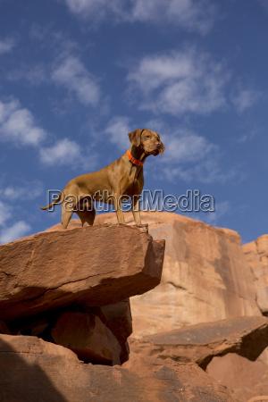 cane in cima alla scogliera