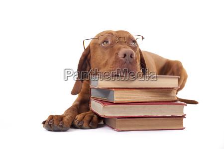 cane occhiali da lettura mucchio libro
