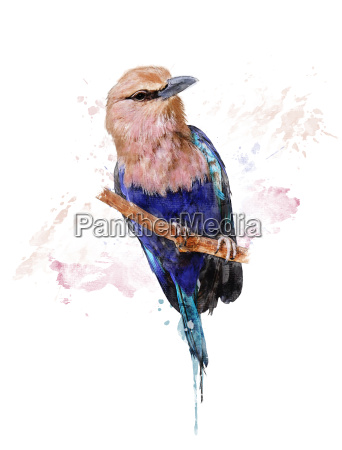 acquerello immagine di blue bellied roller