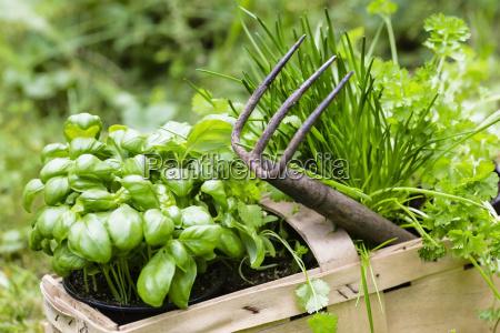 erbe da giardino