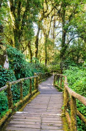 percorso nella foresta di legno