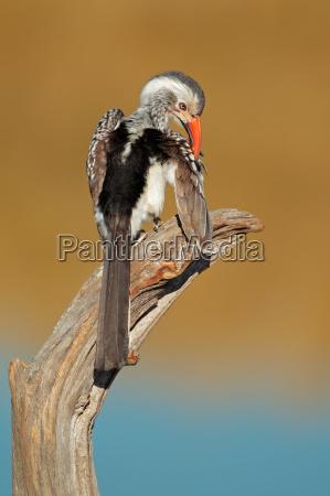 animale uccello fauna africa africano natura