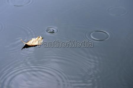 foglia nella pioggia