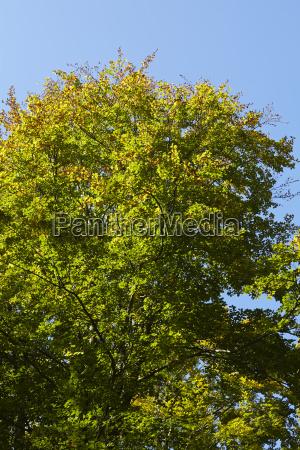 latifoglie foresta albero corone al