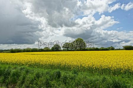 fiore pianta fioritura fiorire agricoltura giallo