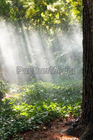 albero giardino legno fascio luce soleggiato