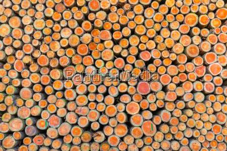 palo di legno