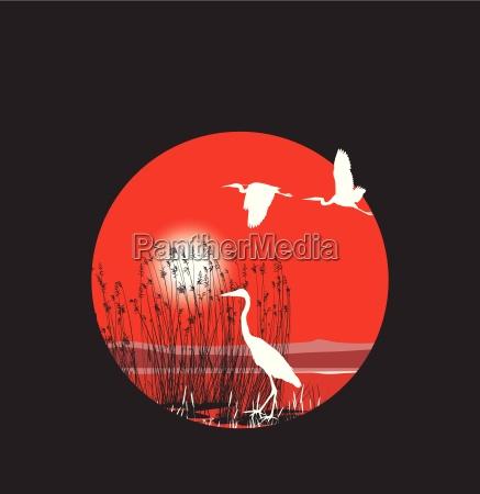 grafico uccelli illustrazione paesaggio natura volato
