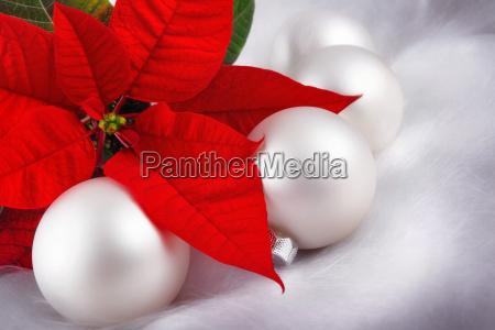 decorazioni natalizie pallido stella di natale