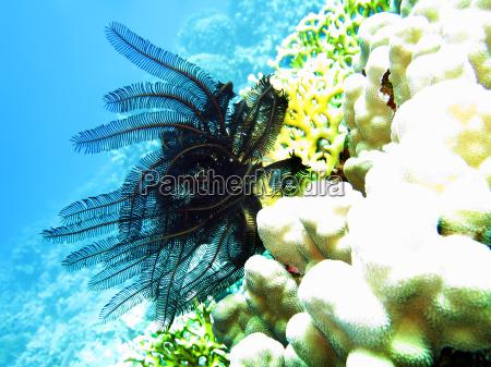 sottacqua egitto immergersi tuffarsi barriera corallina