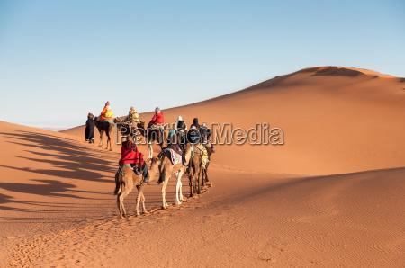 roulotte in cammello con i turisti