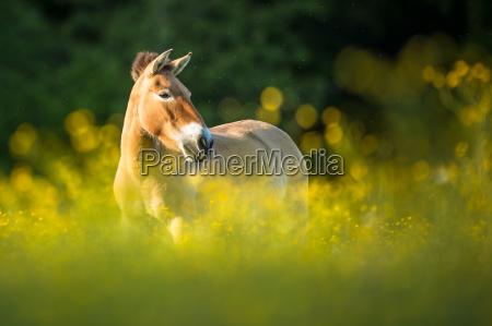 cavallo animale mammifero selvaggio prato