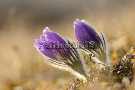 primo piano close up dettaglio fiore