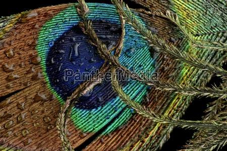 blu primo piano close up dettaglio