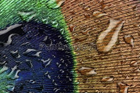 blu accordo primo piano close up