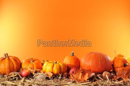 verdura halloween zucca tempo di raccolta