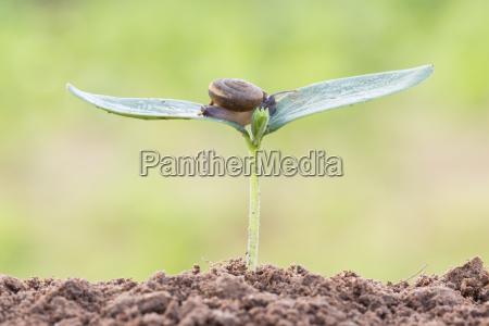 ambiente suolo terra terreno radice chiocciola