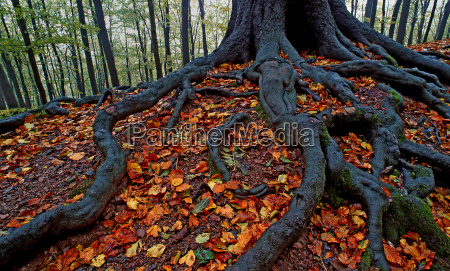 radice rizoma foresta autunno