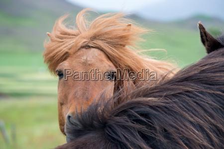 chiudere bello bella cavallo animale mammifero