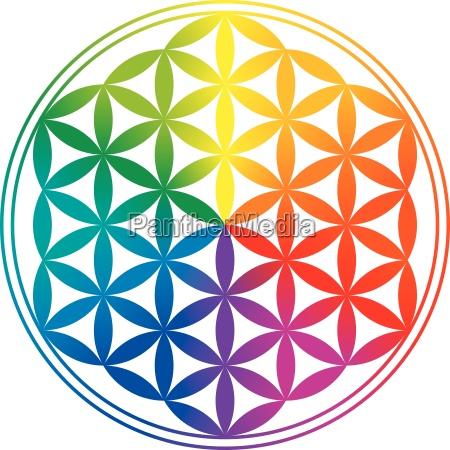 fiore della vita arcobaleno gradienti