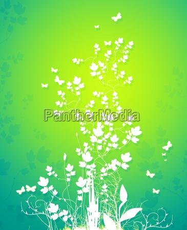 fiore pianta verde farfalla primavera pallido