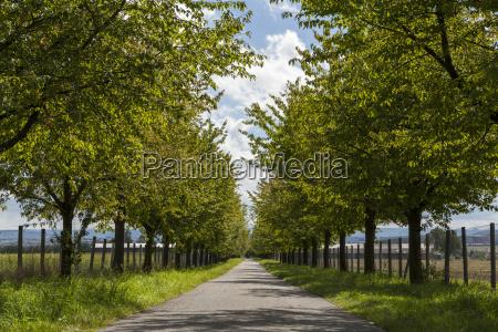 ambiente albero alberi albero caduco ecologia