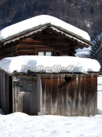 inverno legno freddo alpino pallido neve