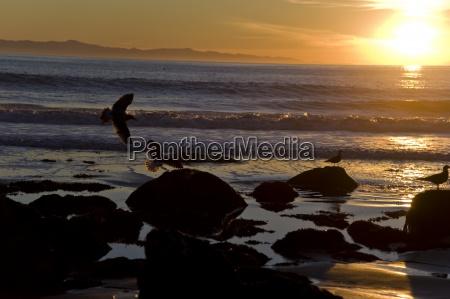 luce animale uccello tramonto riva del