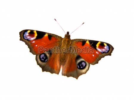 luce bello bella colore animale farfalla