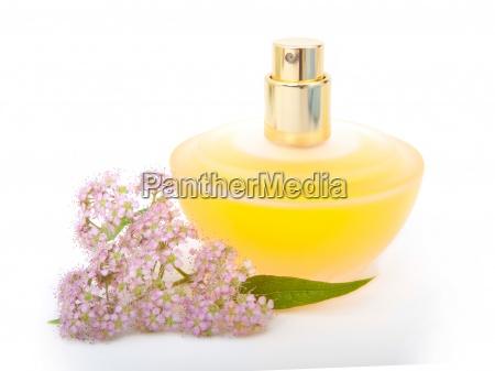 femminile fiore pianta fiori freschezza dorato