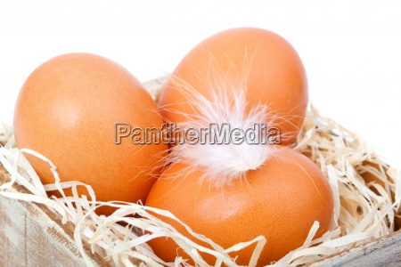 cibo legno pasqua nido crudo uovo