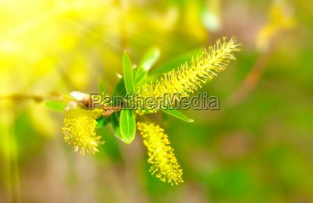 foglia albero nuovo flora estate morbido
