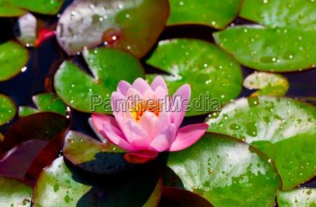 fiore pianta verde fioritura fiorire fiori