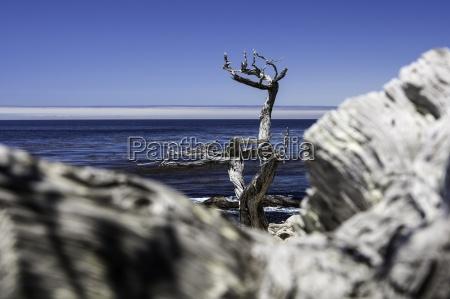 blu albero orizzonte legno tronco california
