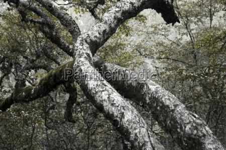 foglia albero verde legno tronco albero