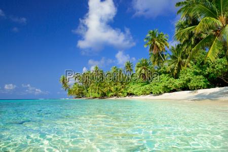 spiaggia con le palme