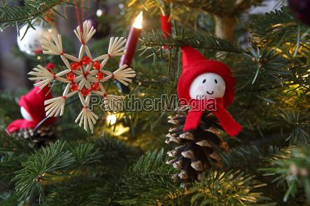 albero inverno abete rosso neve prato